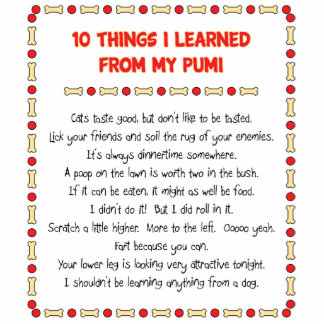 Funny Things I Learned From My Pumi Acrylic Cut Outs