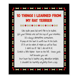 Funny Things I Learned From My Rat Terrier Poster