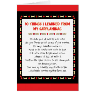 Funny Things I Learned From My Sarplaninac Cards