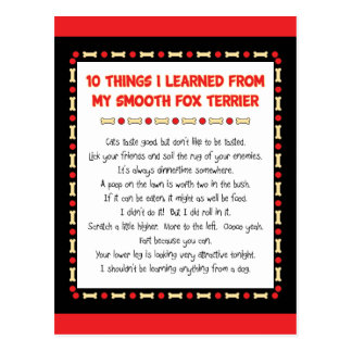 Funny Things I Learned From My Smooth Fox Terrier Postcard