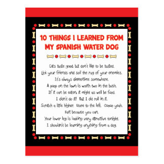 Funny Things I Learned From My Spanish Water Dog Postcard