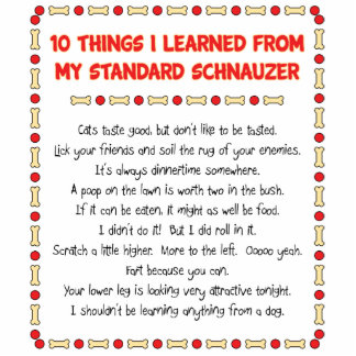 Funny Things I Learned From My Standard Schnauzer Statuette