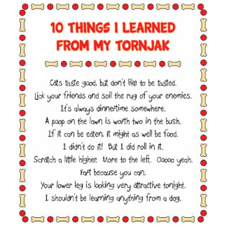 Funny Things I Learned From My Tornjak Acrylic Cut Outs