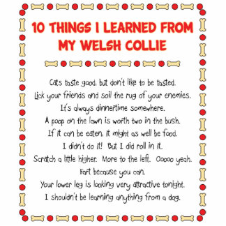 Funny Things I Learned From My Welsh Collie Photo Cutouts