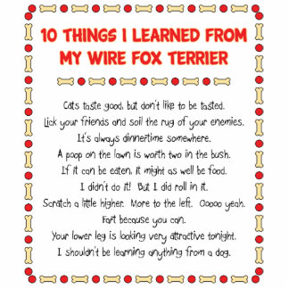 Funny Things I Learned From My Wire Fox Terrier Statuette