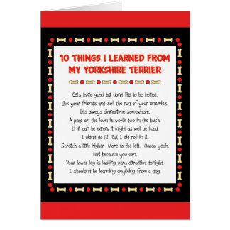 Funny Things I Learned From My Yorkshire Terrier Card