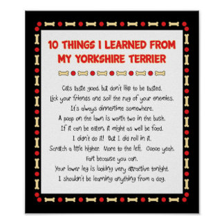 Funny Things I Learned From My Yorkshire Terrier Poster