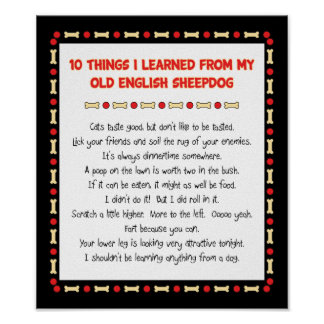 Funny Things I Learned From Old English Sheepdog Poster