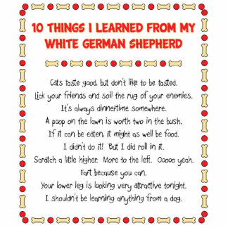 Funny Things I Learned From White German Shepherd Standing Photo Sculpture