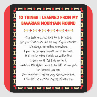 Funny Things Learned From Bavarian Mountain Hound Square Sticker