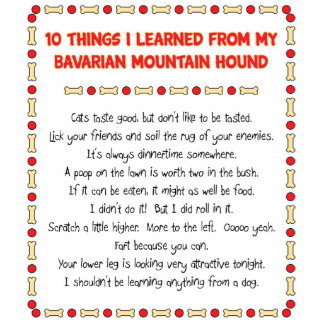 Funny Things Learned From Bavarian Mountain Hound Statuette