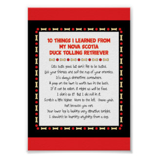Funny Things Learned From Nova Scotia Duck Toller Poster