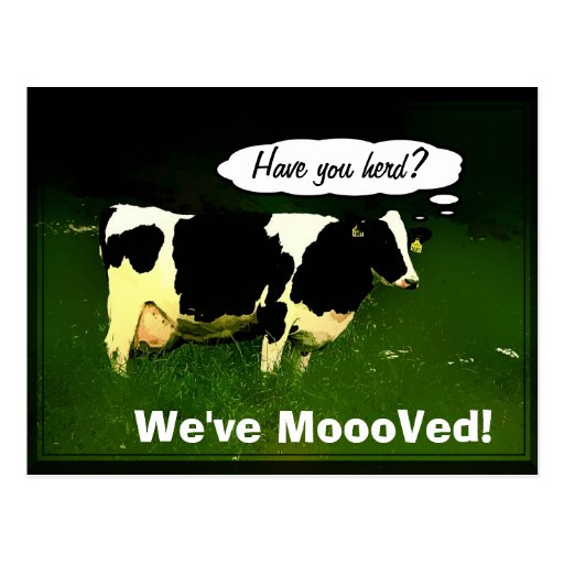 Funny Thinking Cow Postcard