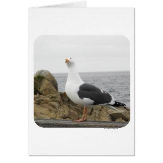 Funny Tilt Head Seagull Greeting Cards