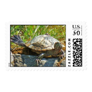 Funny Turtle - Stamp