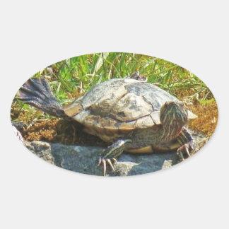 Funny Turtle - Sticker