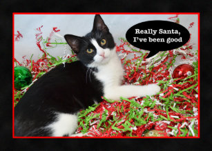 Cat christmas cards zazzle funny tuxedo kitten cat christmas card m4hsunfo