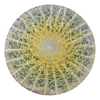 Funny Uncomfortable Arid Cactus