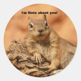 Funny Valentine Day Squirrel Classic Round Sticker