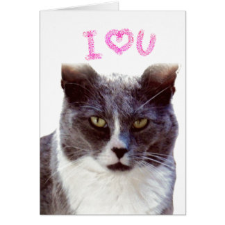 Funny Valentine From Your Cat Greeting Card