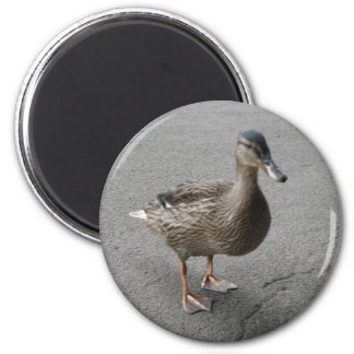 Funny Waddling Duck Magnet