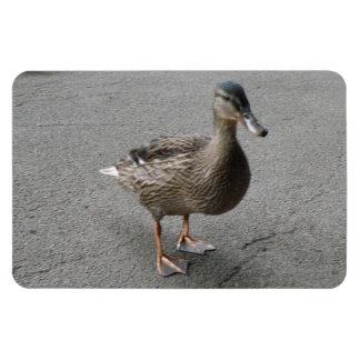 Funny Waddling Duck Premium Magnet