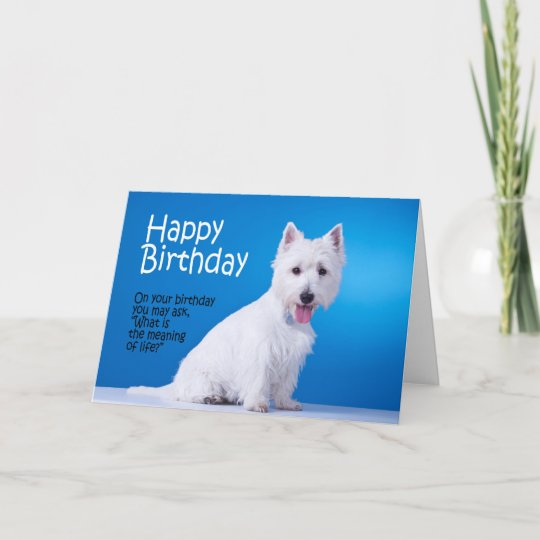 Funny Westie Birthday Card Zazzle