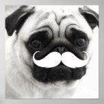 Funny White Mustache Pug Poster