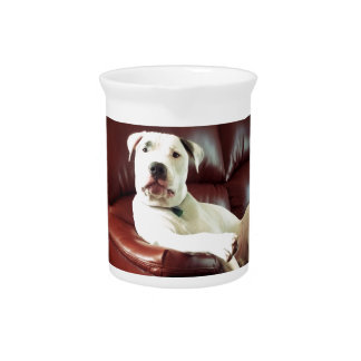 funny white pit bull dog on the couch pitcher