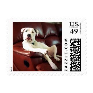 funny white pitbull dog postage stamp