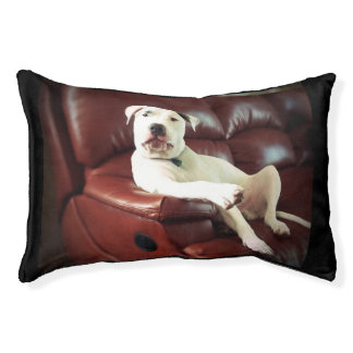 funny white pitbull on couch dog bed