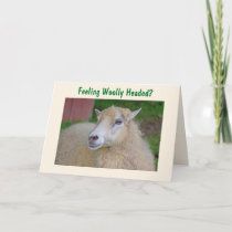 Funny Woolly Sheep Get Well Card