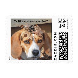 Funny Ya like my new camo hat? Beagle Dog Postage