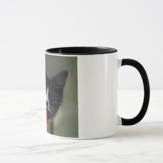 Funny Yawning Black and White Kitten - Need Coffee Mug