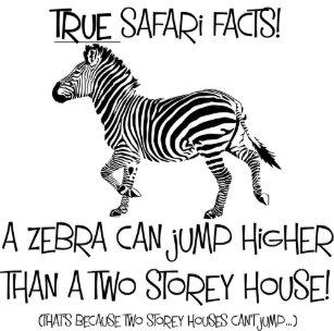 Funny Zebra Birthday Cards Zazzle