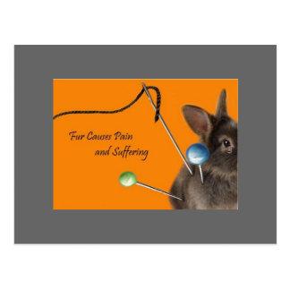 Fur Causes Pain & Suffering Postcard