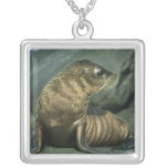 Fur Seal, Arctocephalus galapagoensis), young Square Pendant Necklace