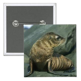 Fur Seal, Arctocephalus galapagoensis), young Pinback Button