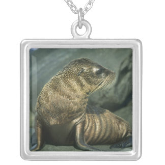 Fur Seal, Arctocephalus galapagoensis), young Silver Plated Necklace