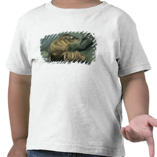 Fur Seal, Arctocephalus galapagoensis), young T Shirts