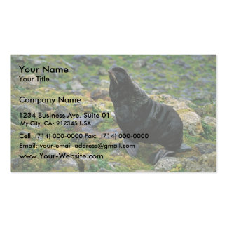 Fur seal Double-Sided standard business cards (Pack of 100)