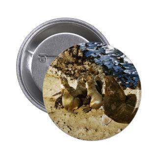 Fur Seal Pins