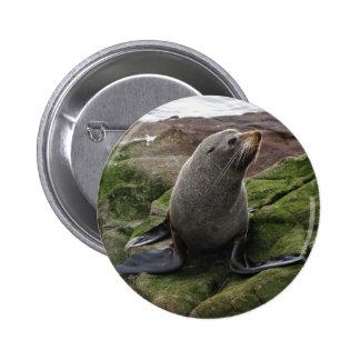 Fur Seal Pin