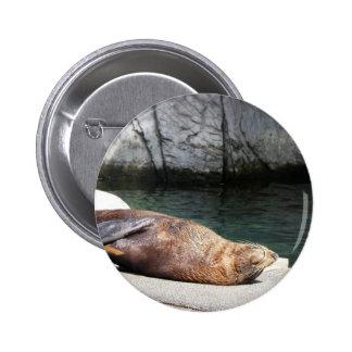 Fur Seal Button
