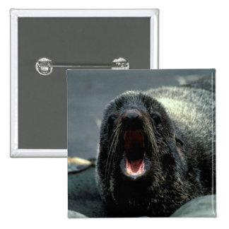 Fur Seal Pinback Buttons