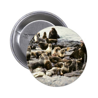 Fur Seal Colony at Haulout Pinback Button