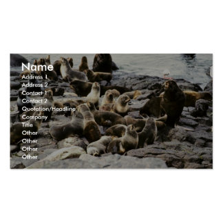 Fur Seal Colony at Haulout Double-Sided Standard Business Cards (Pack Of 100)