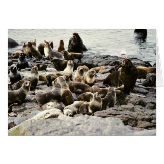 Fur Seal Colony at Haulout Greeting Card