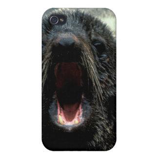 Fur Seal iPhone 4/4S Cases