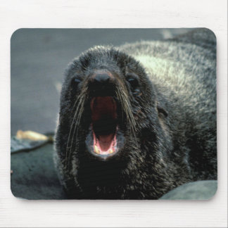 Fur Seal Mouse Pad